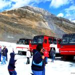 Tourist and 4X4 Buses on the Glacier - Superbuses drive on the glacier - Canadian Rockies