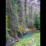 Trees along the river - Green pine trees nestled between a river and mountain - Canadian Rockies