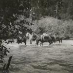 Early explorers - Crossing Deep Creek, 60 miles north of Hazelton, Skeena River District, British Columbia.  Early 1900s. - Canadian Rockies