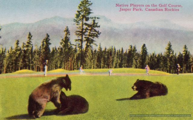 Bears on the Golf Course Photo
