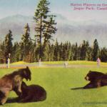 Bears on the Golf Course - Can you imagine? - Canadian Rockies