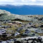 Whistler's Mountain view
