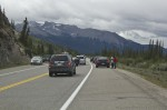 An animal jam on highway 16 in Jasper
