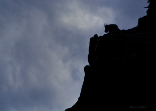 mountain goat silhouette