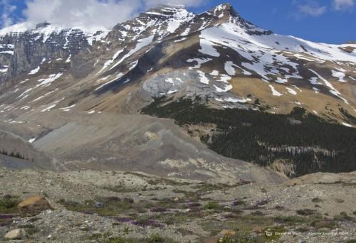 Near Athabasca Glacier